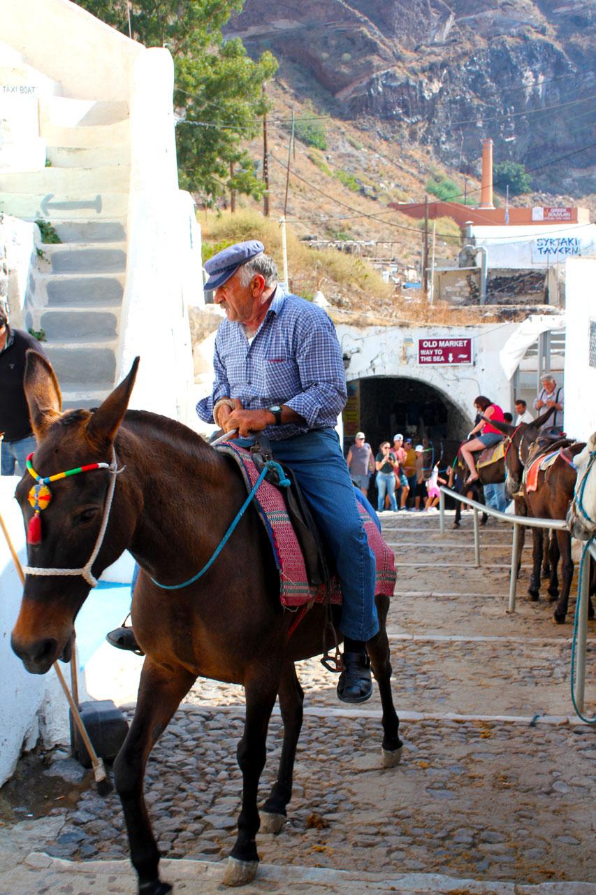 Donkeys in Fira