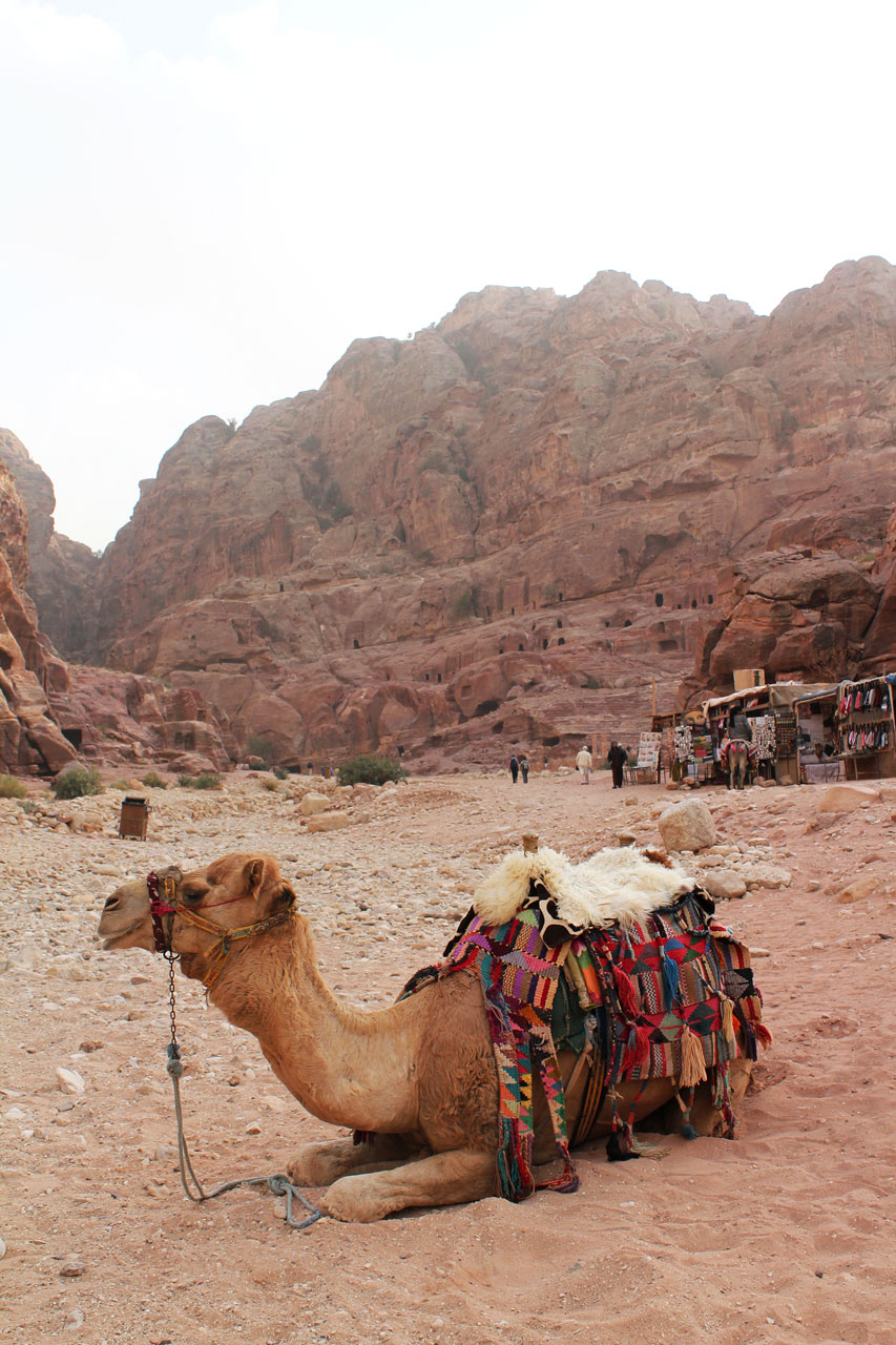 A camel in Petra, Jordan