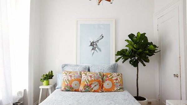 fiddle leaf fig - the sill