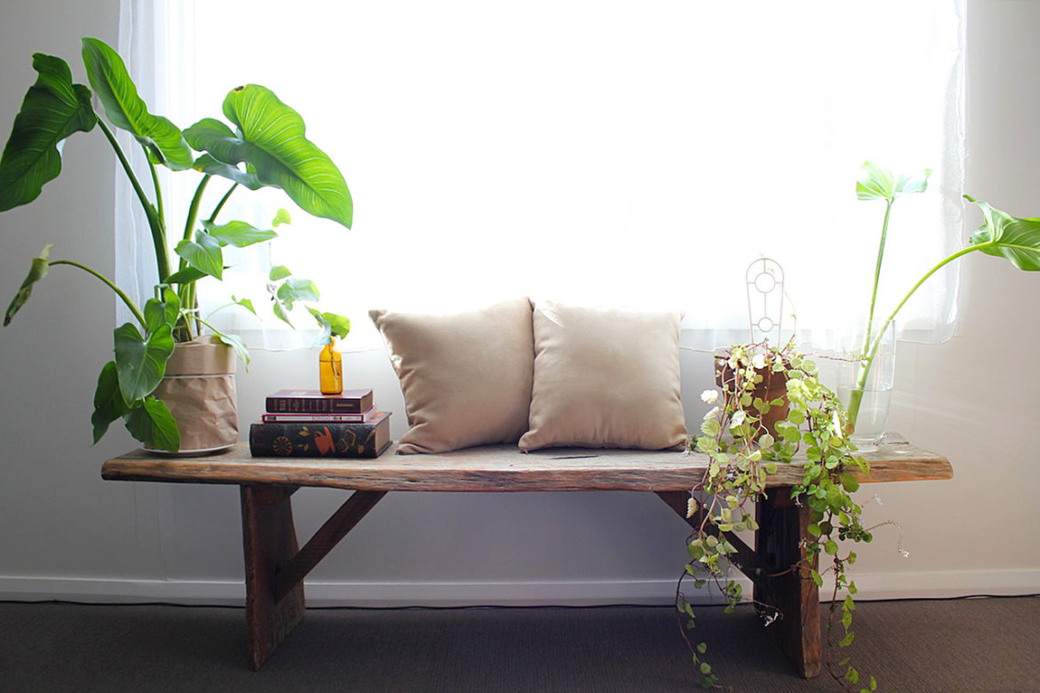 How to choose an indoor statement plant