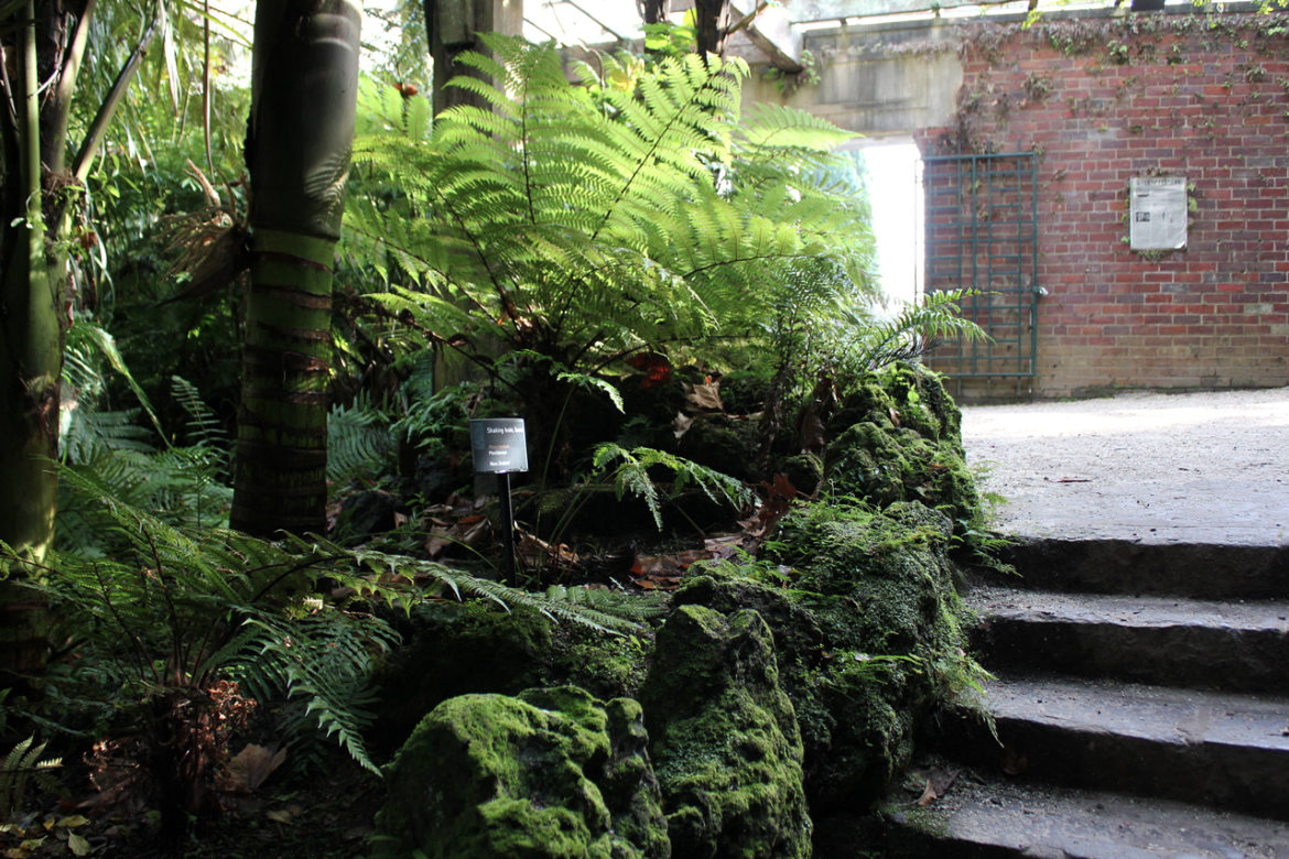 Auckland Domain Fernery