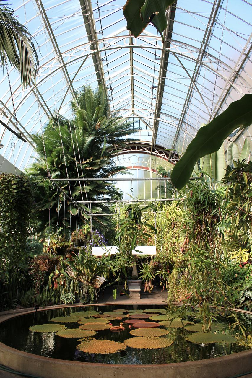 Wintergarden tropical glasshouse pond