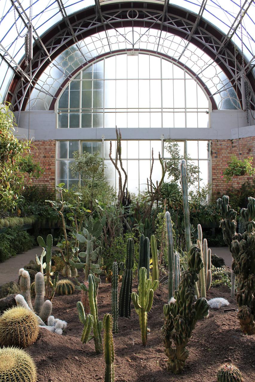 Wintergarden indoor cactus