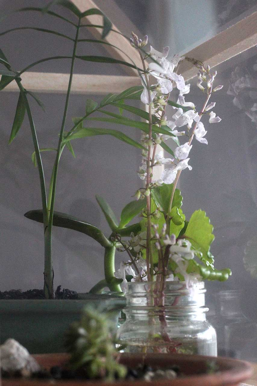 Tiny orchids and plants in the greenhouse