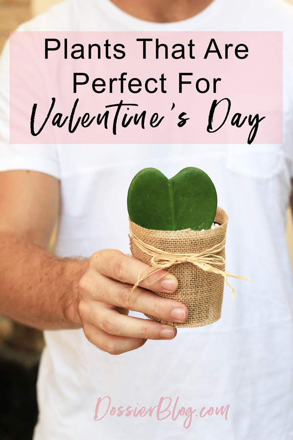 Plants that are perfect for Valentine's Day | Dossier Blog