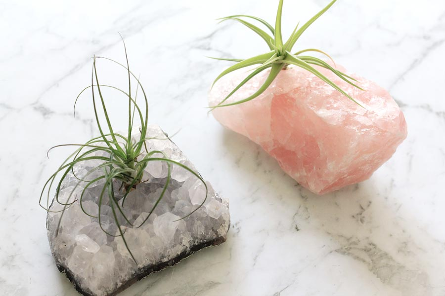 How to grow air plants (TIllandsia) on crystals | Dossier Blog