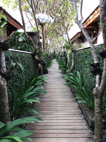 Orchids tied to Frangipani Trees in Bali - guide to creating Tropical gardens | Dossier Blog