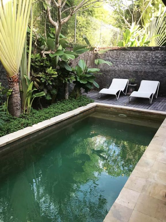 Tropical gardens next to pools will make your outdoor environment next-level! Check out this guide to tropical gardening | Dossier Blog