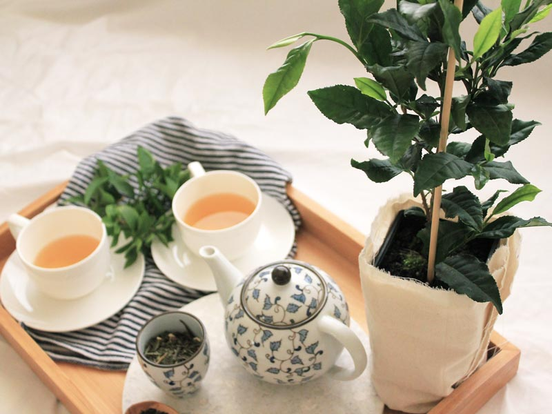 How to make your own tea at home   Dossier Blog