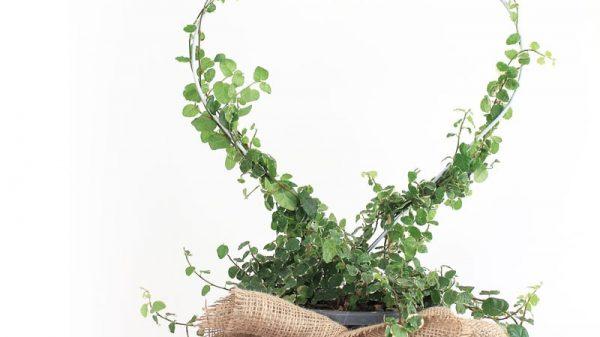 12 DIYs of CHristmas - make a heart planter | Dossier Blog