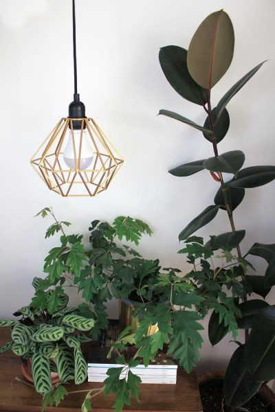 How to use grow lights for indoor plants   Dossier Blog