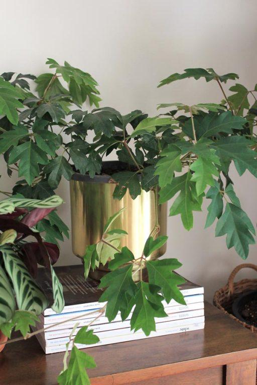 Grape Ivy under a plant LED grow light | Dossier Blog