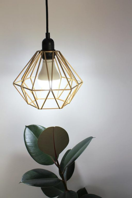 Ficus rubber plant with grow light | Dossier Blog